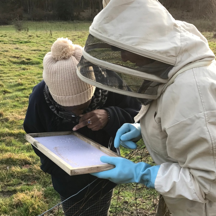 checking tray for varroa